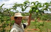 """Cooperfruta lan�a a marca """"Polpa de Frutas Colonial"""" para empres�rios e comunidade de Paracatu"""