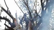 """Incêndio destrói """"Gameleira"""" centenária na Praça do Rosário em Paracatu"""