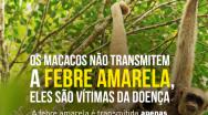 Prefeitura pede que moradores informem caso encontrem macacos mortos na região