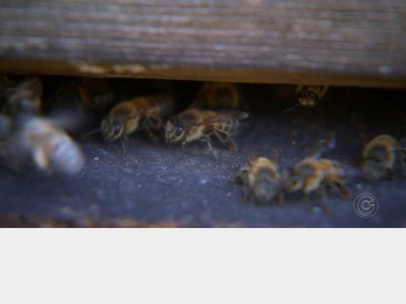 Operador de máquina morre após possível ataque de abelhas em Paracatu - Notícias - paracatu.net